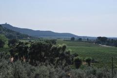 Michele_Satta_vineyards2