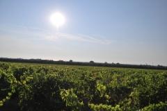 Michele_Satta_vineyards3